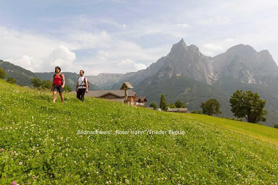 """Von fast allen höher gelegenen Bergbauernhöfen der Südtiroler Marke """"Roter Hahn"""" können Urlauber einfach loswandern. Bildnachweis: """"Roter Hahn""""/Frieder Blickle"""