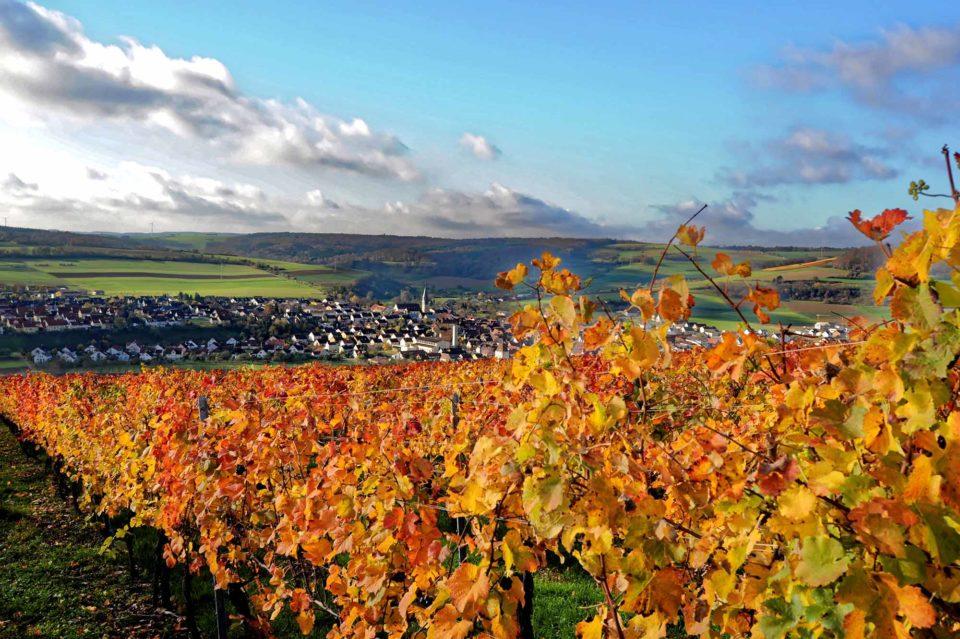 """Der Weinbau prägt seit mehr als 950 Jahren den staatlich anerkannten Erholungsort Markelsheim, der jüngst zu einem """"Weinsüden Weinort"""" in Baden-Württemberg ernannt wurde. Der """"Trapperbus"""" erlaubt einen wunderbaren Ausblick auf die zahlreichen Weinberge.  Foto: Holger Schmitt"""