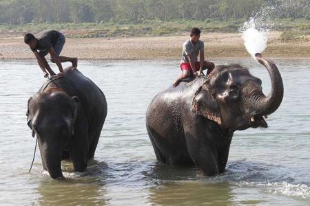 Elefanten-Bad in Sauraha. Foto: Lassuns.reisen / Stefanie Gendera